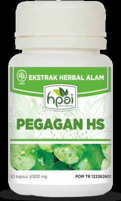 PEGAGAN HS